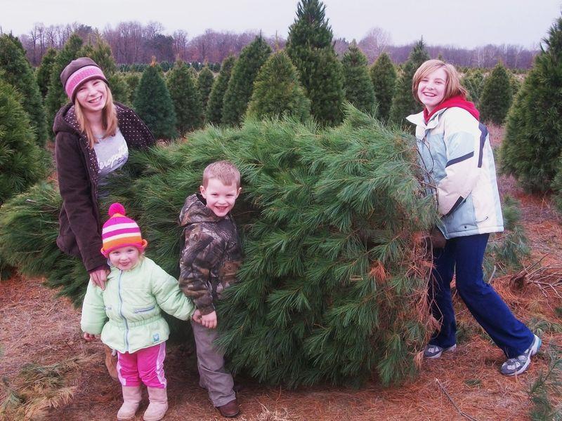 Christmas tree photos 010